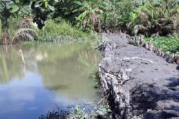 Hạn mặn ở Đồng bằng sông Cửu Long - Bài 2: Xây dựng kịch bản ứng phó