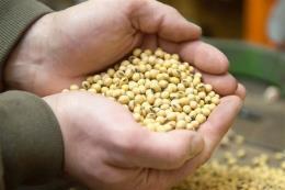 USDA nâng dự báo kim ngạch xuất khẩu của nông sản Mỹ sang Trung Quốc