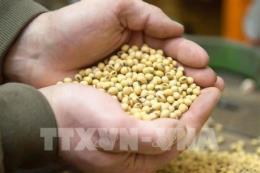 Thị trường nông sản biến động trái chiều trong tuần qua
