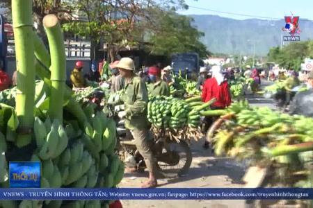 Chợ chuối lớn nhất miền Trung ngày cuối năm