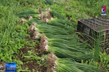 Người Việt mưu sinh từ nghề nông ở Nga